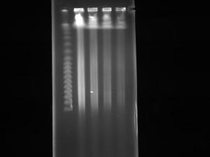 ideal DNA