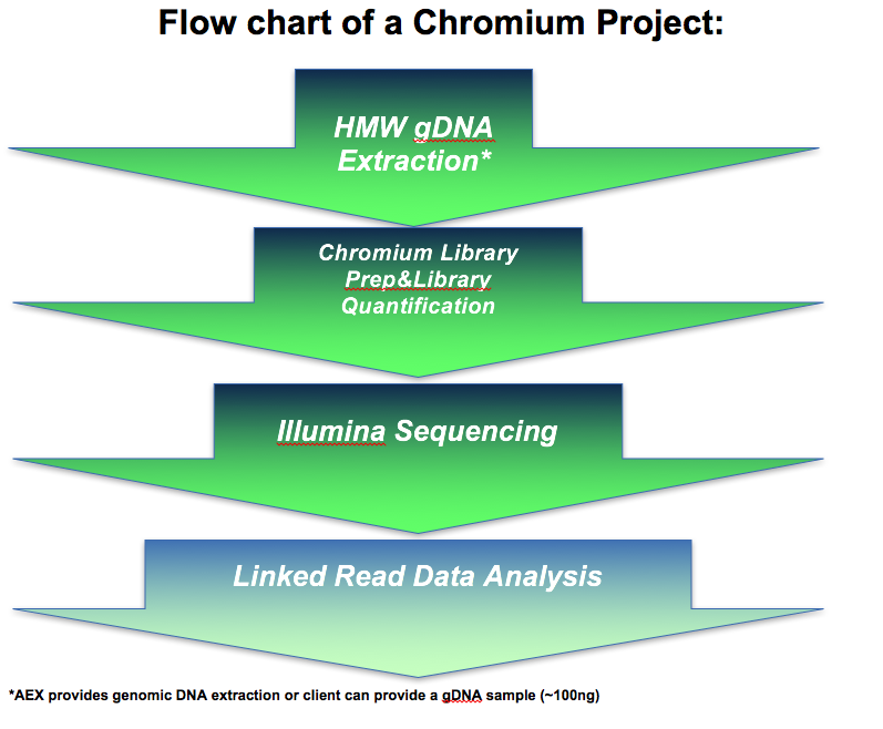 flowchart-Gemcode